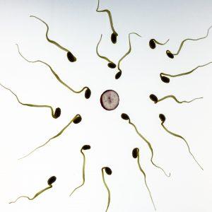 sperm-956480_1920